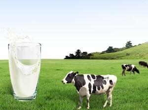 奶牛计步模块应用于牧场养殖管理